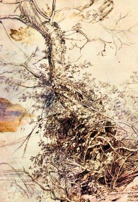 Peter Paul Rubens Study of Tree Art Print Poster - 13x19