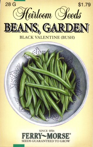 Ferry-Morse 3748 Heirloom Seeds Beans - Black Valentine