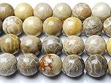 【 福縁閣 】10mm【 フォッシルコーラル 】 1連(約38cm) _LR7-10/A8-3 天然石 パワーストーン ビーズ