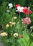 Tropica - Wildblumen - Südafrika - Pastellgarten (16 Sorten) - 1000 Samen