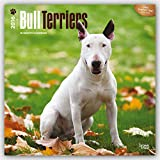 Bull Terriers 2016 Calendar