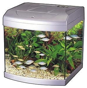 5 gallon fish tank amazon aquarius 5 rounded 5 gallon for Fish tank decorations amazon