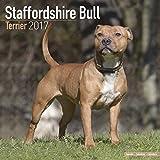 Staffordshire Bull Terrier Calendar - Dog Breed Calendars - 2016 - 2017 Wall calendars - 16 Month by Avonside