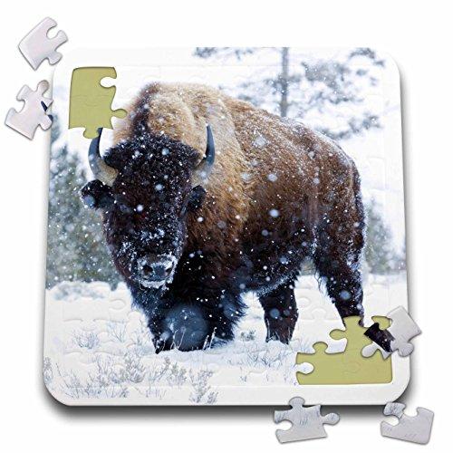 Danita Delimont - Animal - Bison Bulls, winter landscape - 10x10 Inch Puzzle (pzl_231137_2)