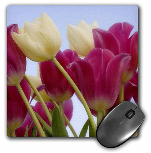 Danita Delimont - Flowers - Detail of tulips - NA01 BJA0110 - Jaynes Gallery - MousePad (mp_83331_1)