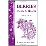 Berries, Rasp- & Black ~ Louise Riotte