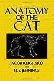 Anatomy of the Cat