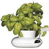 Sagaform 5007176 Stoneware Single Herb Pot, Large
