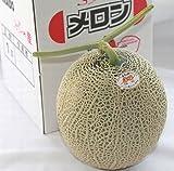 【北海道富良野産メロン】糖度15度以上 最高級ふらのメロン 赤肉メロン2Lサイズ(1.5kg)×1玉 ランキングお取り寄せ