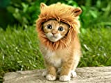 Prymal Lion Mane Dog Cat Costume. This Pet Costume Turns Your Pet Into a Ferocious Lion! (Please Be Aware of Fake Products From Other Sellers)
