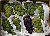 ぶどう ナイアガラ種セット葡萄 ブドウ 信州産 ナイアガラ レッドナイアガラ