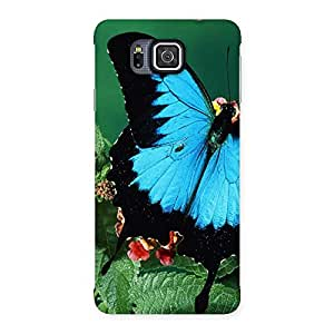 Ajay Enterprises blue beautifull betterfly Back Case Cover for Galaxy Alpha