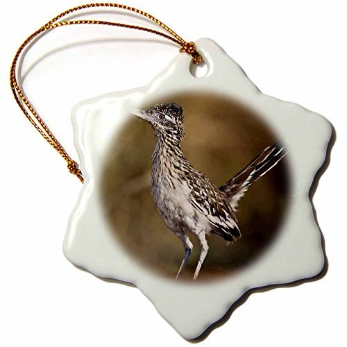 Ornaments to Paint Danita Delimont - Birds - Greater Roadrunner bird, Texas, USA - US LDI3 - Larry Ditto -