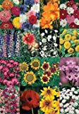Wildflower Cut Flower Mix DGS30027A (Multi Colors) 500 Open Pollinated Seeds by David's Garden Seeds