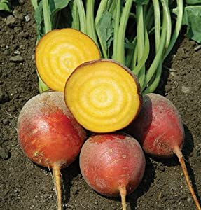 Organic Touchstone Gold Beet 50+ Seeds