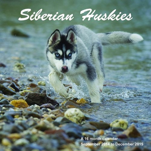 Siberian Huskies Calendar - 2015 Wall calendars - Dog Calendars - Monthly Wall Calendar by Magnum
