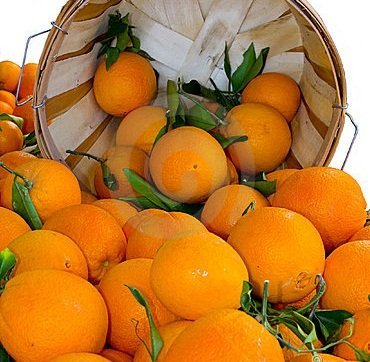 Organic Mountain Navel Oranges 1 Dozen (12) from Organic Mountain Orchards