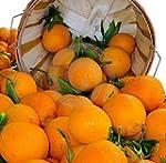 Organic Mountain Navel Oranges 1 Doze...