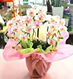 光触媒 胡蝶蘭鉢植え 【造花】 白ミディ3本立て 【1日から2日でお届け】 枯れない胡蝶蘭