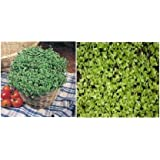 2 packs of CRESS seed - Fine curled and Common Cressby Haddons