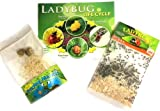 1,500 Live Ladybugs & 2 Praying Mantis Eggs with Ladybug Poster