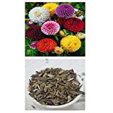 alkarty zinnia seed 10 pices