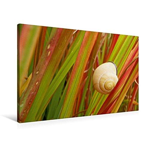 premium-textil-leinwand-90-cm-x-60-cm-quer-rote-rutenhirse-wandbild-bild-auf-keilrahmen-fertigbild-a