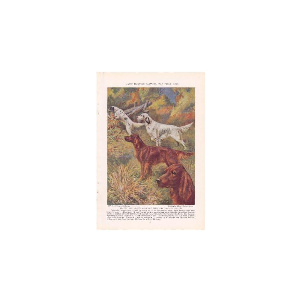 1937 Irish Red Setter English Setter Hunting Dogs Edward Herbert Miner Vintage Dog Print