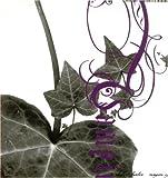 echange, troc Shadow Huntaz - Vampire