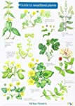 Guide to Woodland Plants (Field Studi...