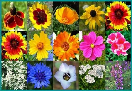 Wildflower Butterfly Mix - 1000+ Seeds Beautiful Bouquet Flowers