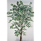 Artificial Variated Ficus Tree Replica Plant- 5 Feet