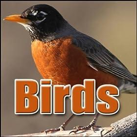 Amazon Com Bird Whippoorwill Whippoorwill Single Call