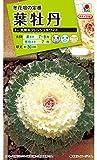 タキイ種苗葉牡丹F1 丸葉系フレッシュホワイト