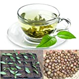 20 Green Tea Organic 100% Seeds Bonsai Or Garden Plant. Easy Growth for Healthy Life