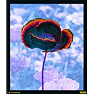 "PixTopper Poppies 05 Paper Poster(Large 44""x44"")"