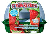 Dune Craft Grow your own Strawberries