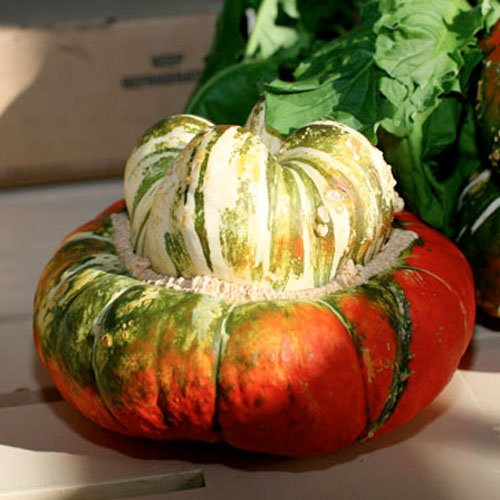 Package of 30 Seeds, Turks Turban Winter Squash (Cucurbita maxima) Non-GMO Seeds by Seed Needs)