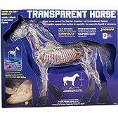 動物模型 馬