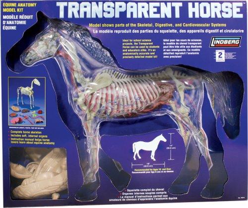 Lindberg 1:4 scale Transparent Horse model kit