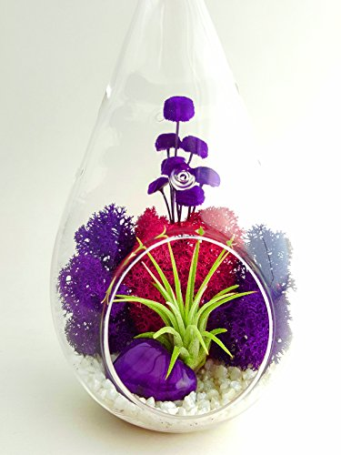bliss-gardens-air-plant-terrarium-kit-with-7-teardrop-glass-moss-flowers-and-agate-purple-passion