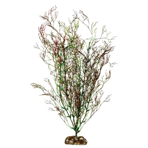 Aqueon Coral Aquarium Plant plant tissue plant anatomical model biological teaching model plant specimens plant dicotyledonous stem model gasencx 0085