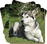 4x Alaskan Malamute Dog Picture Coasters Gift Set, Ref:AD-AM1C