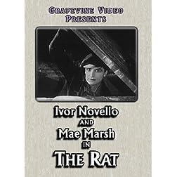 Rat 1926