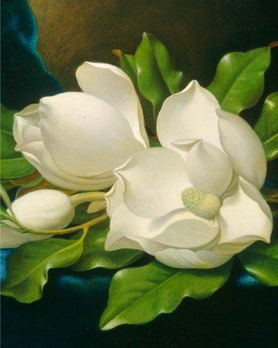 giant-magnolias-on-a-blue-velvet-cloth-notebook-8x10-ruled