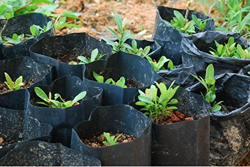 Poly Grow Bags (12x22 Cm) For Germination & Sprouting In Nurseries & Kitchen Gardens (100.00)