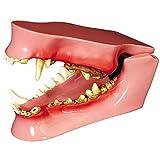 Canine/Dog Jaw Anatomical Model (Color: Flesh, Tamaño: False)