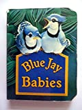 img - for Blue Jay babies book / textbook / text book