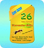 LIVE Harvester Ants -- (Pacific NW Red and Black) for Ant Farms Plus Free Ant Chow