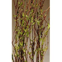 Green Floral Crafts Leaf Birch Branches 3-4 Feet, Pack of 5 - Green
